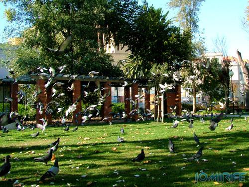 Jardim Municipal da Figueira da Foz (1) Pombas [EN] Municipal Garden of Figueira da Foz - Doves