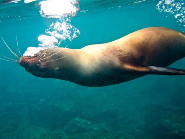 Galapagos Islands (5)