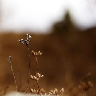 natura free