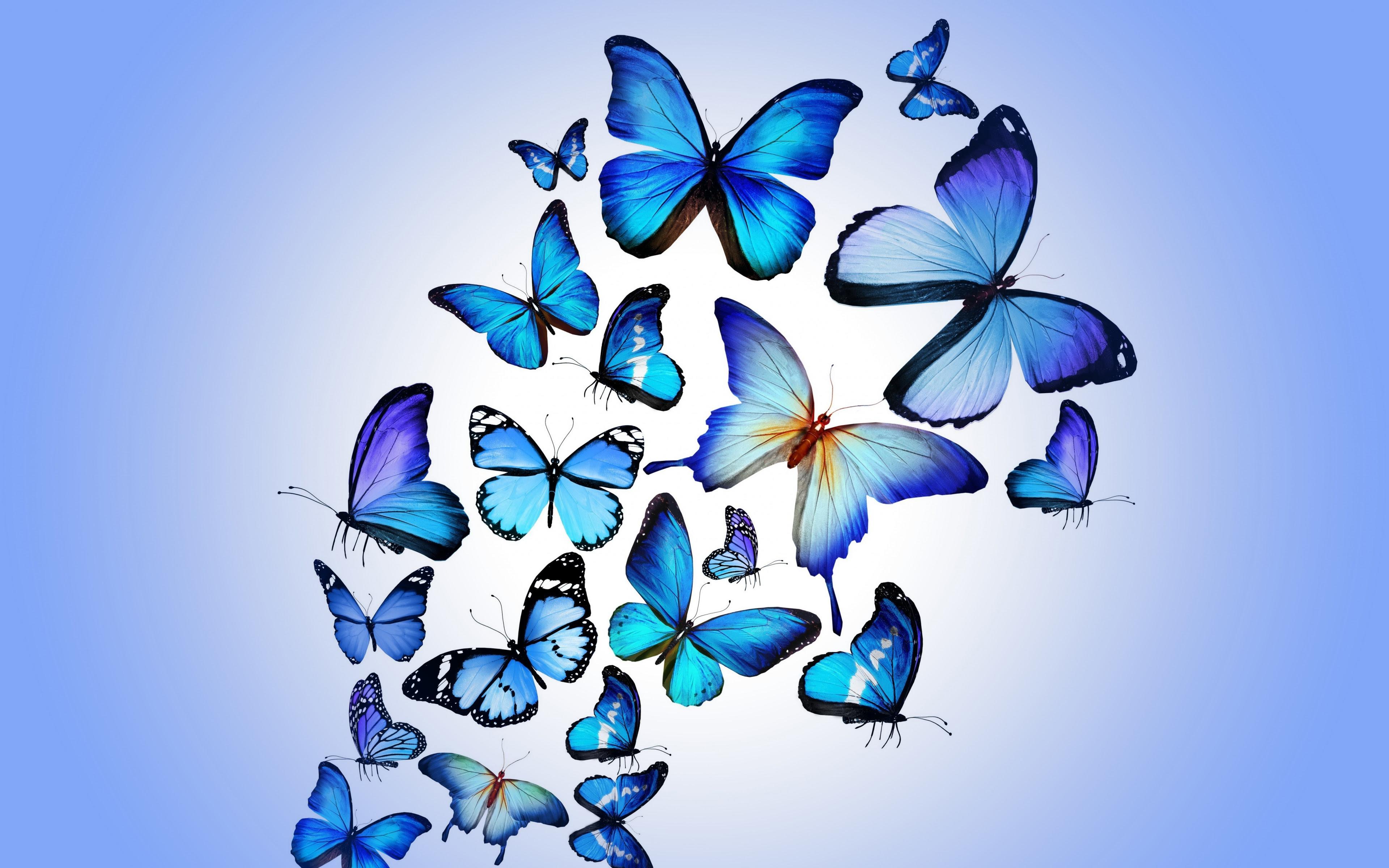 Butterfly Art, HD Artist, 4k Wallpapers, Images ...