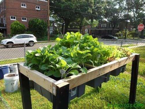 Self Watering Veggie Table Autorriego para macetas, fácil y gratis