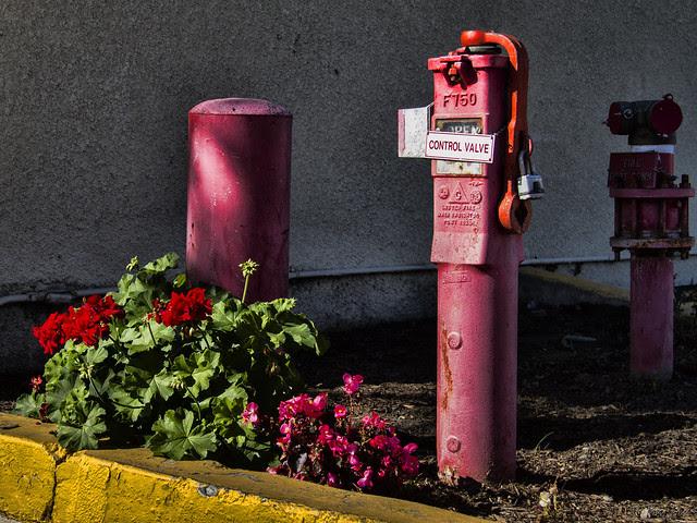 Fire main and geraniums