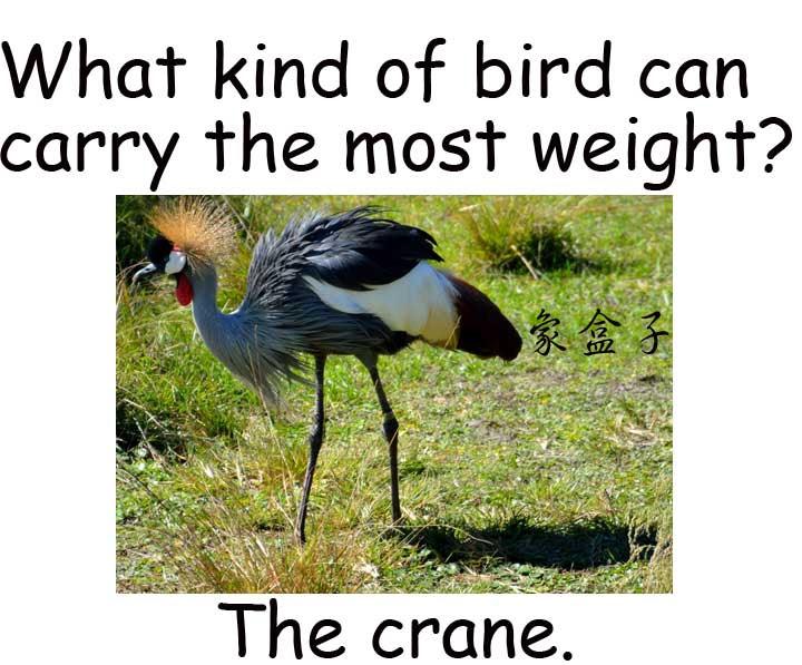 crane 鶴 起重機