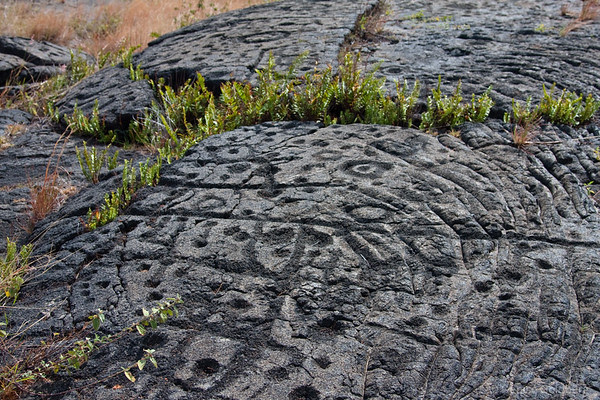 Pu'u Loa Petroglyph trail, hawaii volcanoes national park