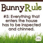 Bunny Rule 5