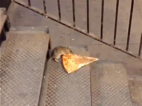You Love Pizza Rat. You Don't Own Pizza Rat   WIRED