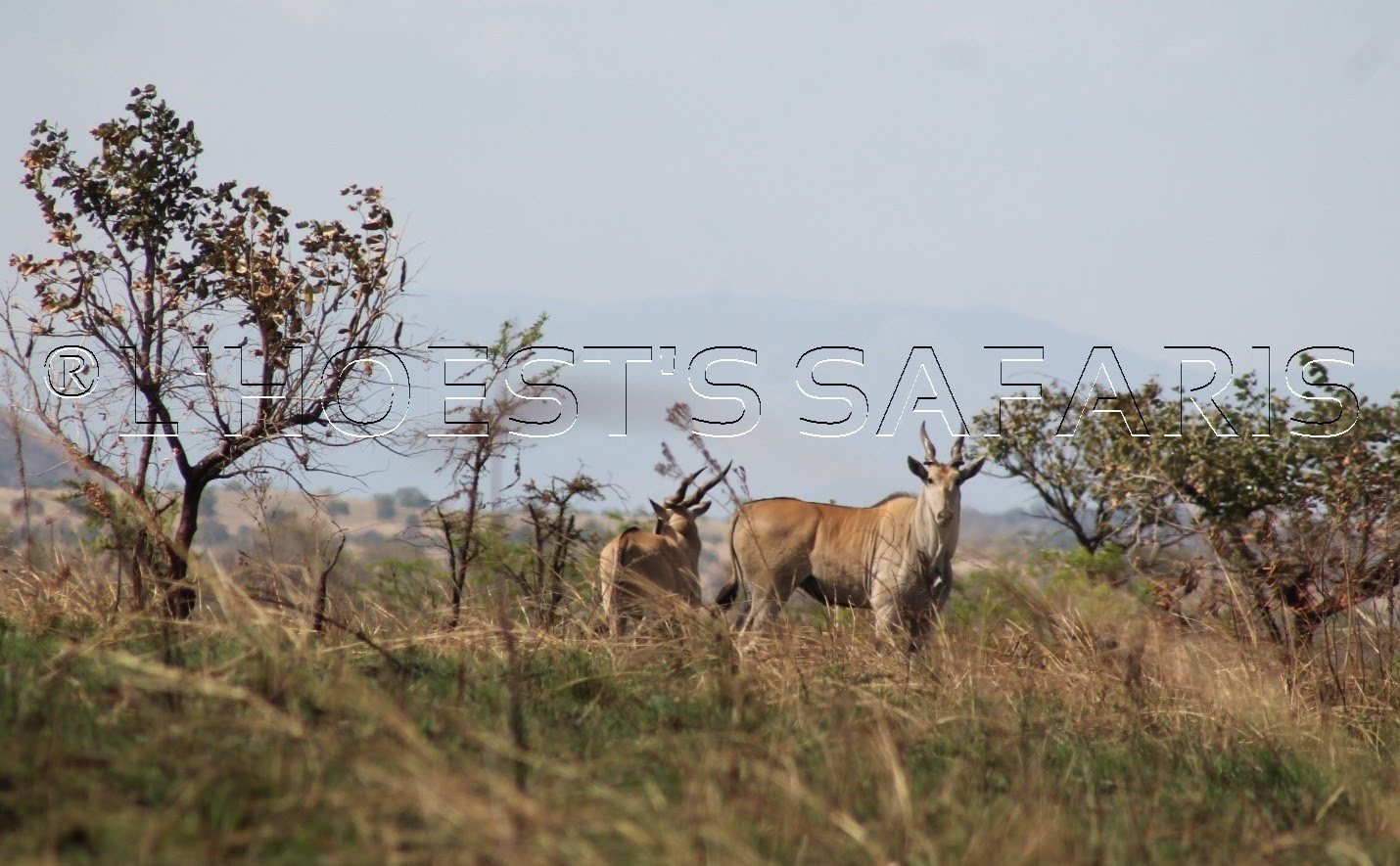 5 days kidepo valley national park wildlife safari