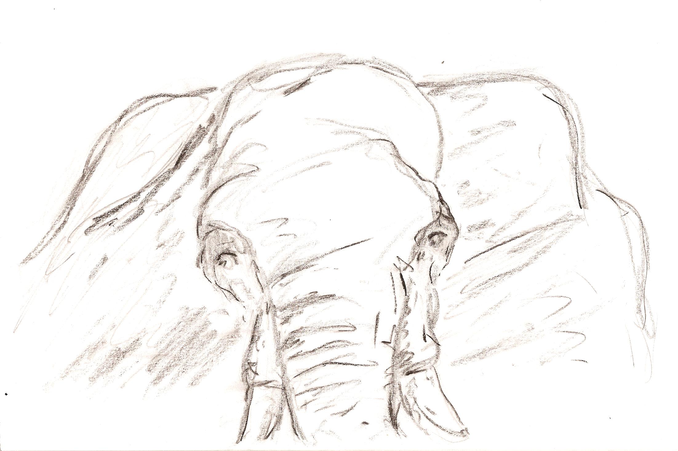 elephant drawings drawing pics