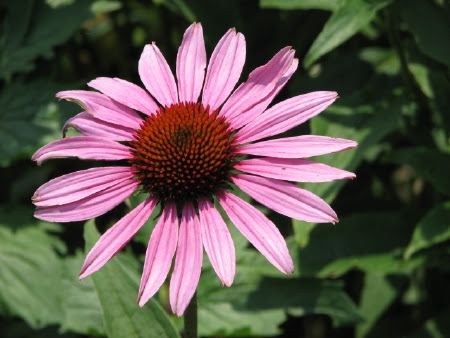 flower in Asheville