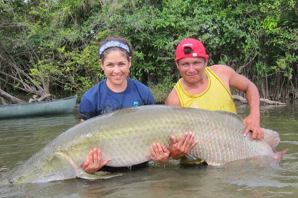 Meet The Arapaima, The Amazon 'River Monster' That Has ...