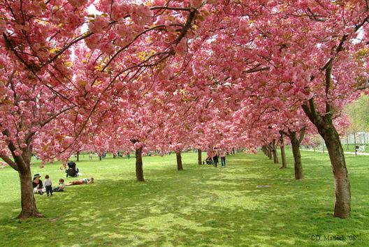 CherryTrees Matlack