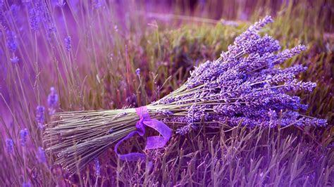 full hd wallpaper lavender bunch grass field violet