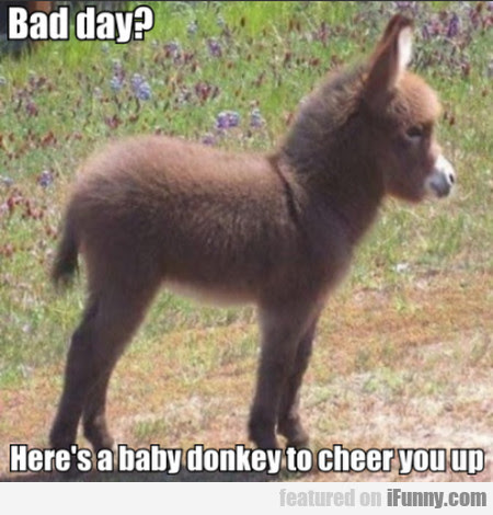 Bad Day Heres A Baby Donkey To Cheer You Up Ifunnycom