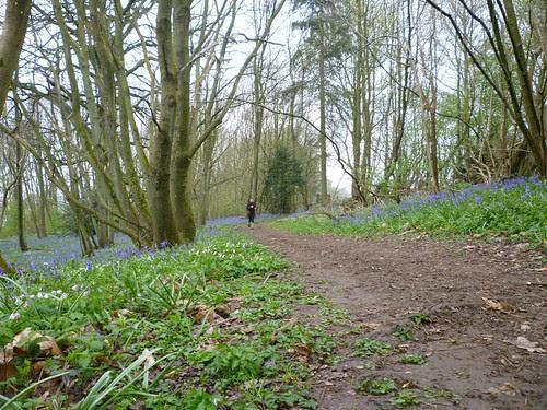 NDW Easter Sunday morning run - Bluebells in the woods near Kemsing by ultraBobban