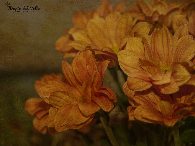 Orange_daisys_textured