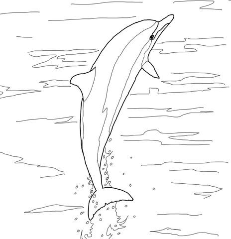 malvorlage springender delphin