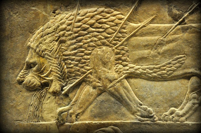 Assyrian Lion. Alabaster bas-relief depicting a dying lion. He has been hit by 4 arrows; blood gushes from the entry and exit points of the arrows. One of the arrows has passed through the left shoulder; note the limping of the left foreleg. The lion also appears to vomits blood! From Room C of the North Palace, Nineveh (modern-day Kouyunjik, Mosul Governorate), Mesopotamia, Iraq. Circa 645-535 BCE. The British Museum, London. Photo©Osama S.M. Amin.