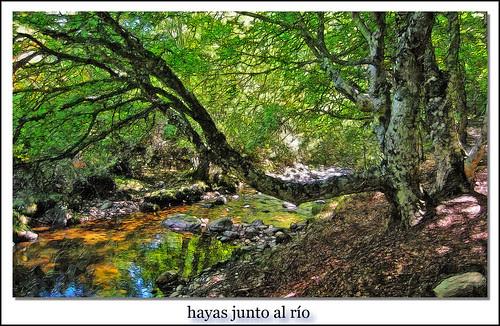 hayas y río jarama