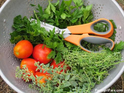 (19-13) Parsley, English thyme, Greek oregano, and a few volunteer tomatoes from the kitchen garden - FarmgirlFare.com