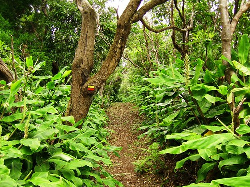 Pico Alto-Stª Maria-Açores