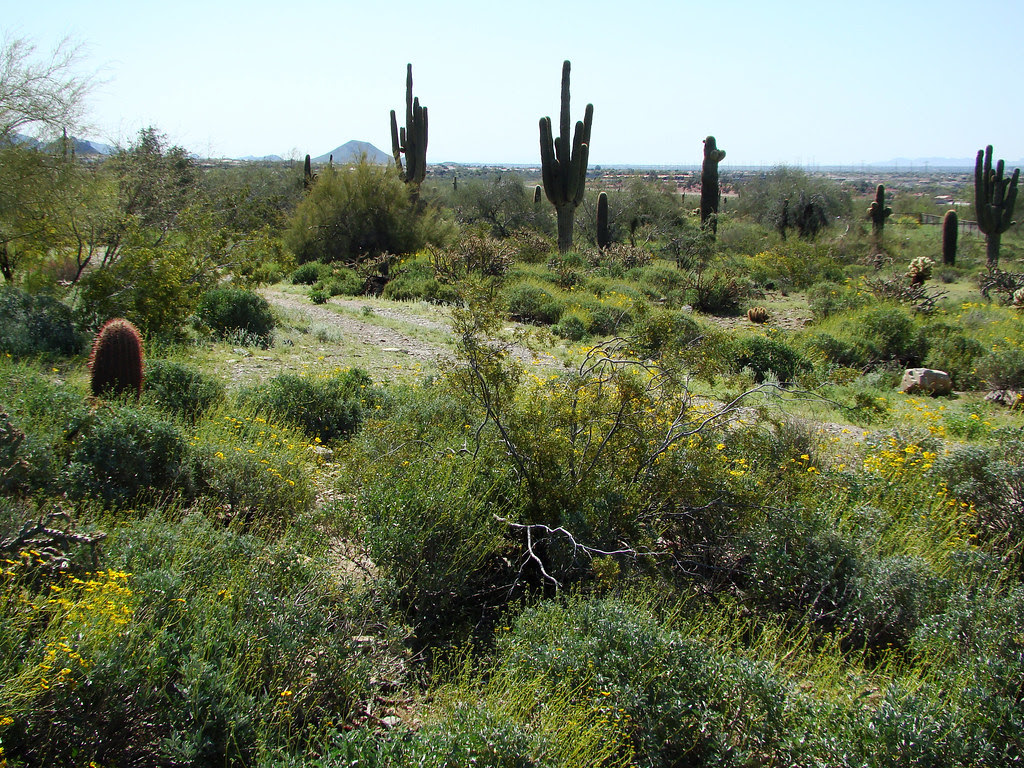 DSC05357 Taliesin West - Sonoran Desert view