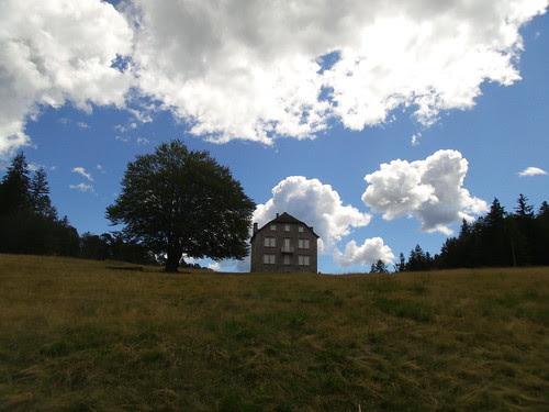 Il grande albero vicino alla casa by Ylbert Durishti