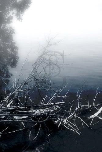 Orillia - Driftwood in Fog, Bass Lake Provincial Park