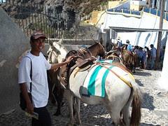 Keldai2 di Pulau Santorini, Greece