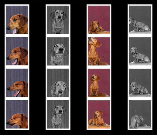 photobooth dachshund2