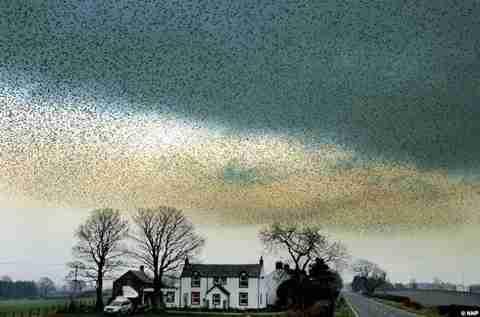 Σύννεφα από πουλιά!
