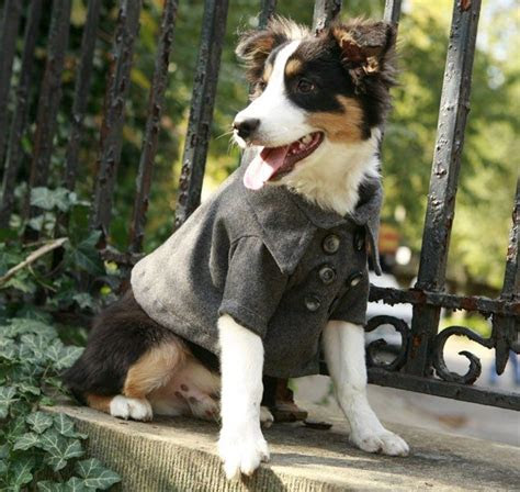 fashionable doggie attire  sweetest occasion