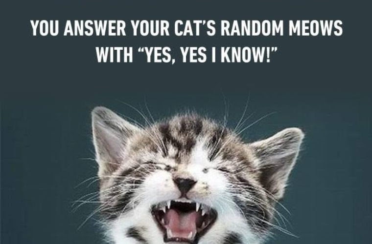 Crazy Cat People Do Funny Pictures Quotes Memes Funny Images