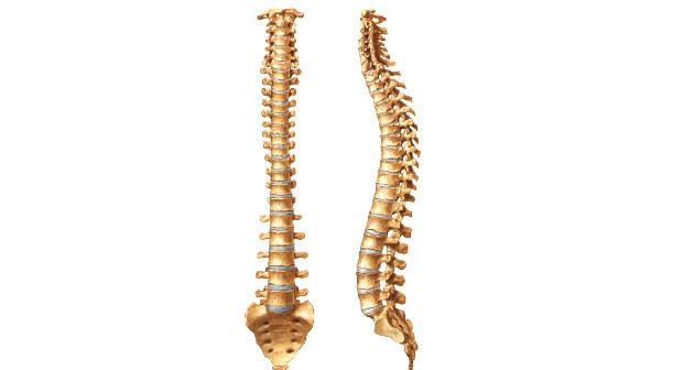 Resultado de imagem para coluna vertebral fotos