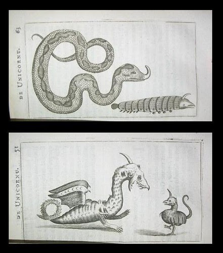 Unicorn snakes and dragons