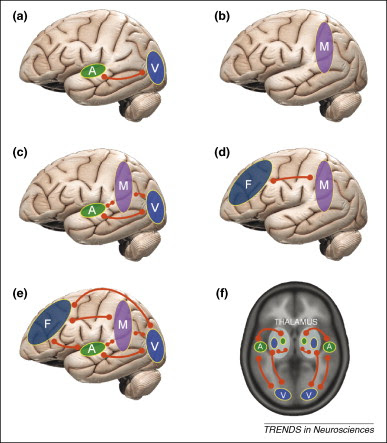 neuralsynchrony2