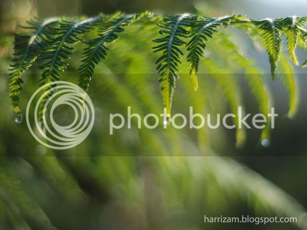 Myretina 2 0 cameron highland wallpaper - Highland park wallpaper ...