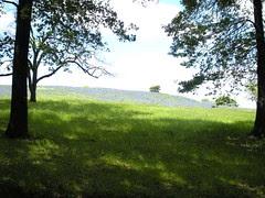 Beyond the gate at Bluebonnet Hill