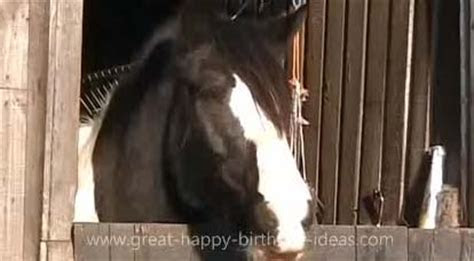 Happy Birthday Horse Style! Free Pets eCards, Greeting