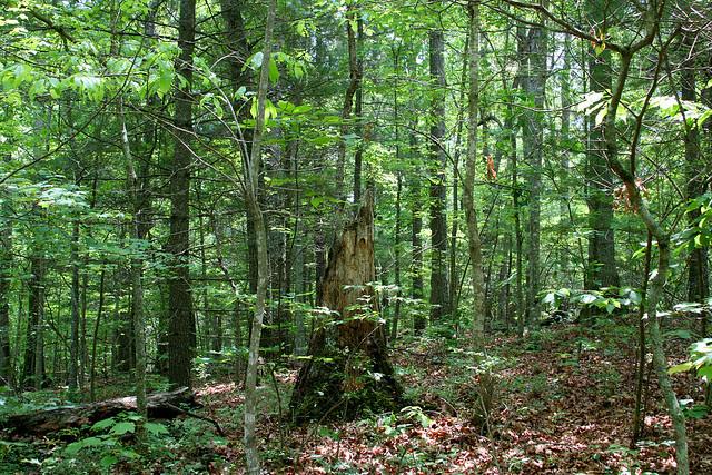 9_woods