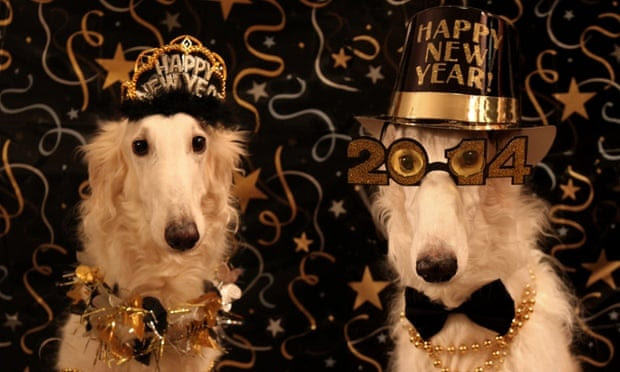 happy new year dogs
