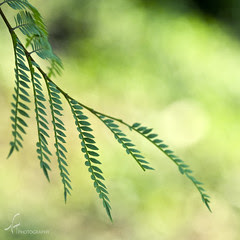 simple vision by imago2007