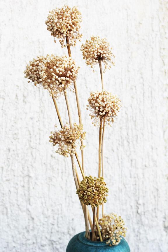 dry onion flowers