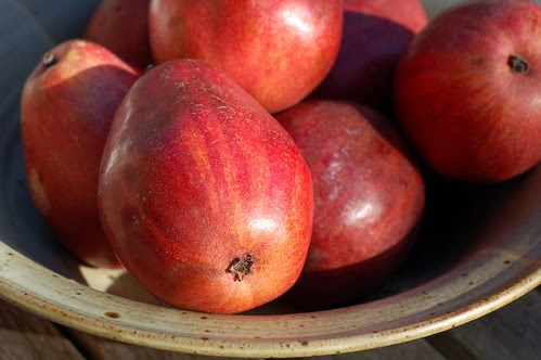 Red Anjou pears by Eve Fox, Garden of Eating blog, copyright 2010