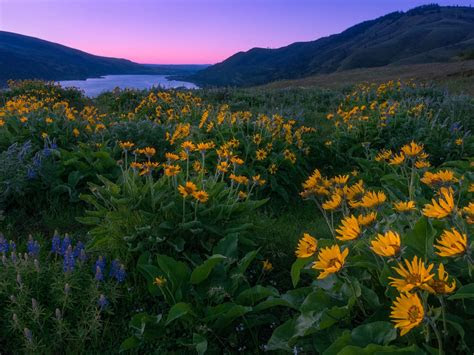 columbia river  north america sunset spring yellow