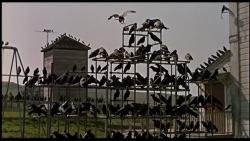 Sinyard_Birds_Frame2