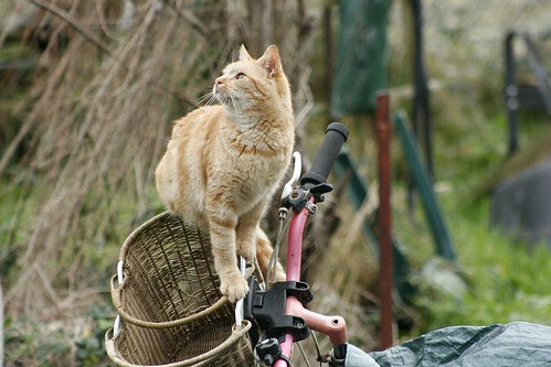 the feral life compassion cats bicycle cat  feral cat