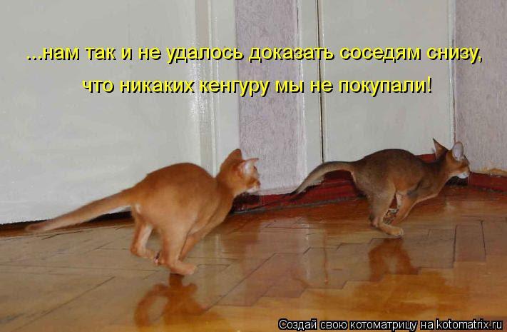 Котоматрица: ...нам так и не удалось доказать соседям снизу,  что никаких кенгуру мы не покупали!