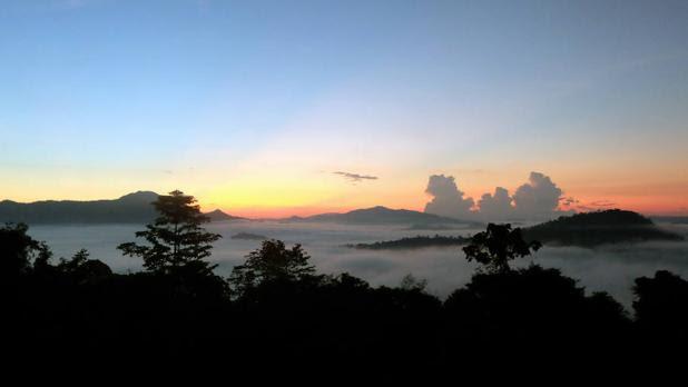 Bosques en Borneo (Malasia)