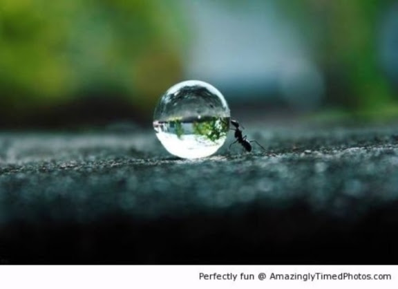 Ant-pushing-a-water-droplet-resizecrop--