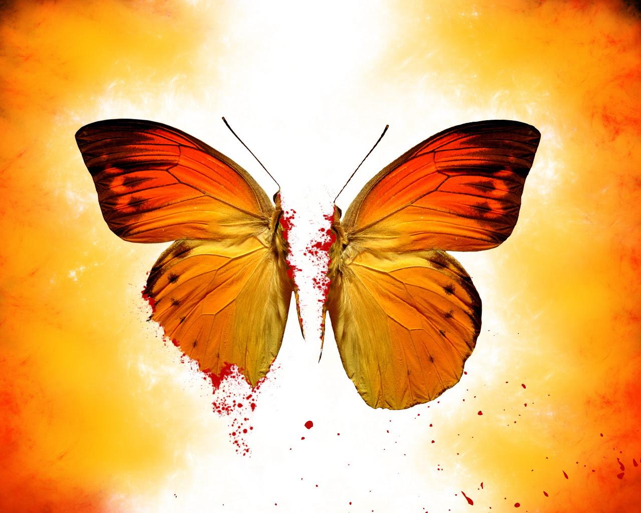 Butterfly beautiful Wallpaper Wallpapers - HD Wallpapers 87006